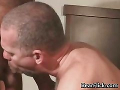 Fat hairy bear getting his cock sucked part5